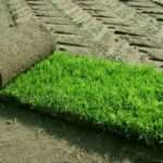 В чем главные преимущества рулонного газона