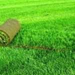 Качественный газон в рулонах на выгодных условиях от компании Горгазон