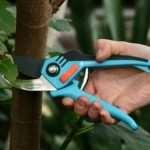 В каких нишах чаще всего применяют садовый секатор?