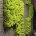 Вертикальное озеленение стен из разных сортов мха
