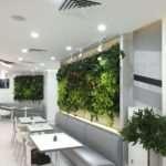 Озеленение офиса – лучший способ улучшения имиджа