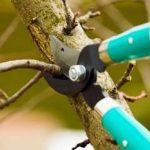 Когда и зачем нужно производить обрезку деревьев