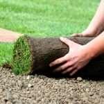Как проводится укладка рулонного газона?