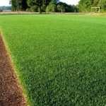 Обустройство газонов различных типов от компании «Газоны и Ландшафты»