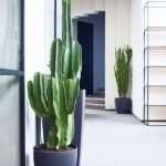 Услуги по профессиональному озеленению офисов