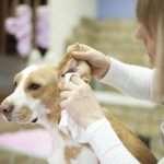 Уход за здоровьем домашних животных